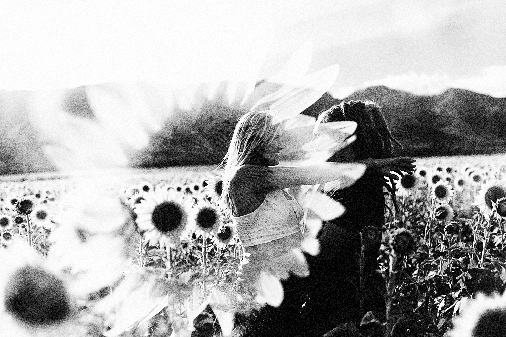 sunflower field photos portraits photography.